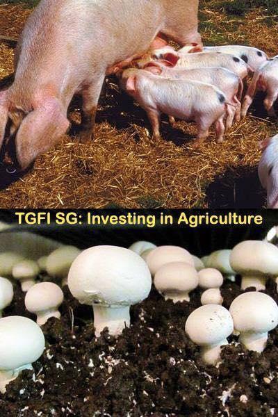 TGFI SG - April 11